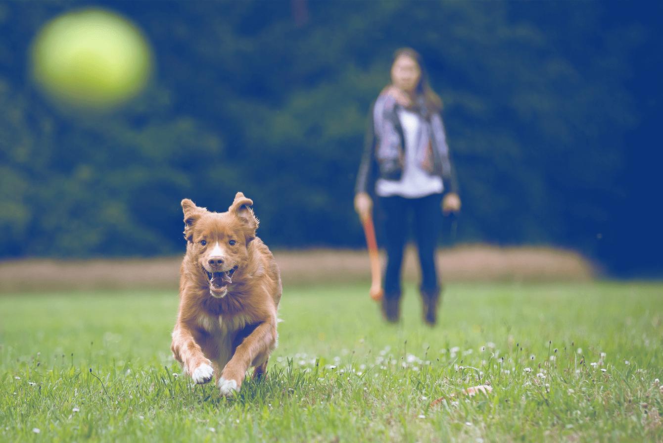 paseando a mascota con juguete